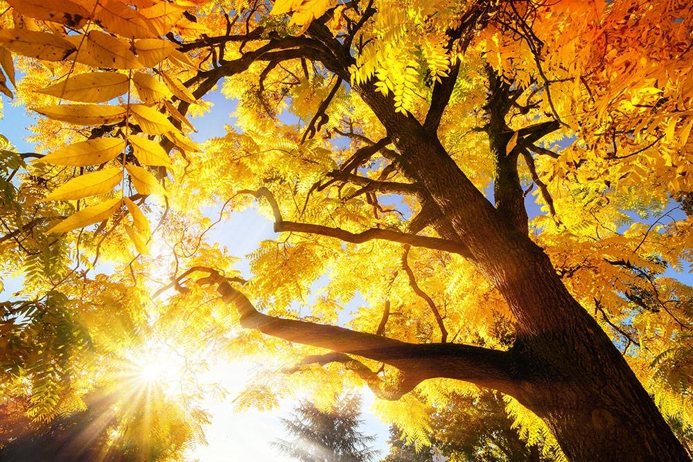 Hofgarten Coburg, Gärten Coburgs, Herbst